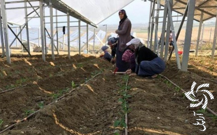 قابلیت تولید برق خورشیدی همزمان با تولید محصولات کشاورزی و دامپروی برق خورشیدی